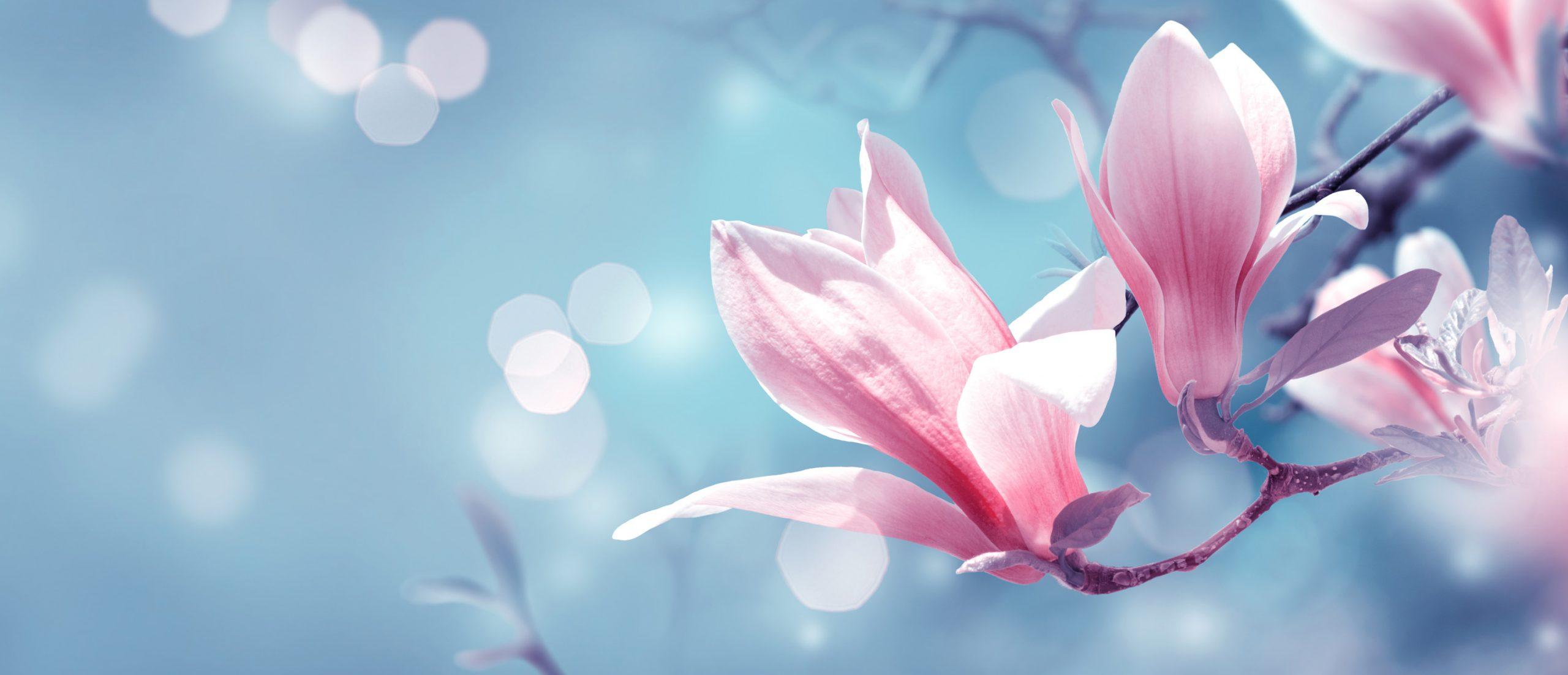 magnolie@bayer-bayer.com