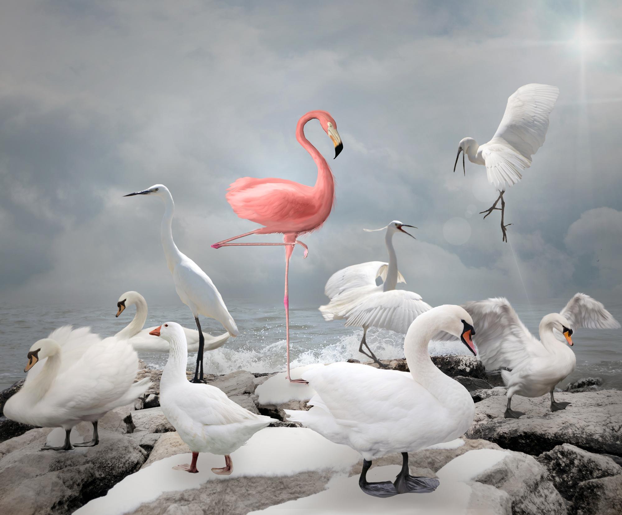 flamingo@bayer-bayer.com